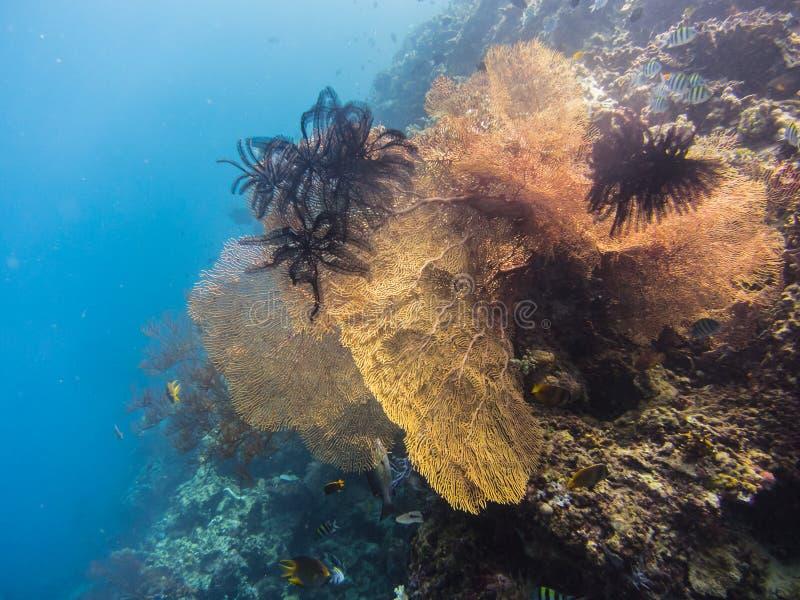 красивейший коралловый риф стоковая фотография