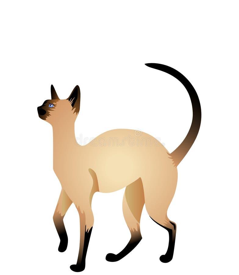 красивейший кот сиамский иллюстрация штока