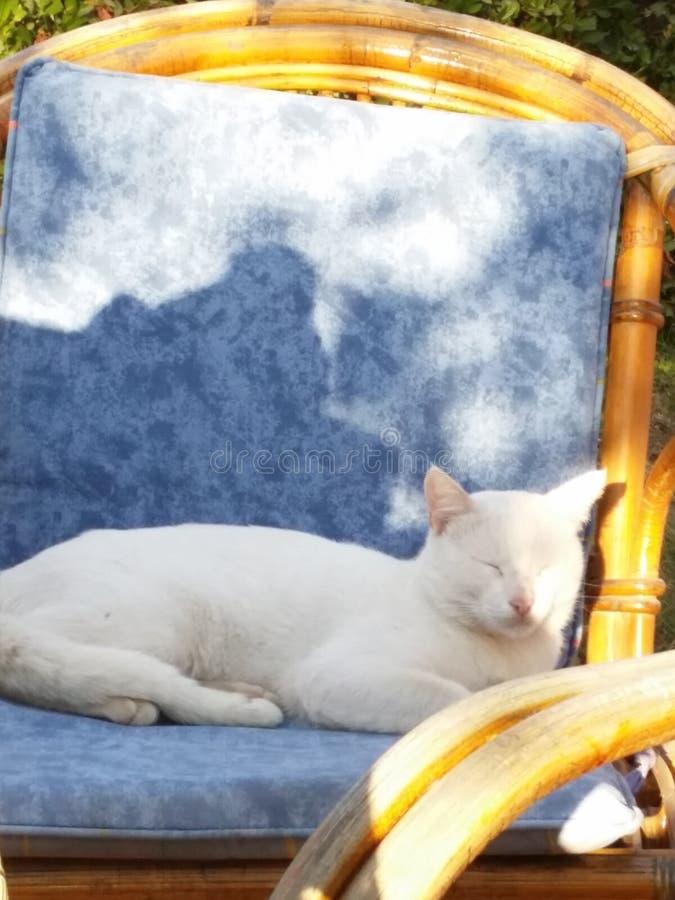 красивейший кот стоковое изображение rf