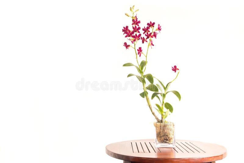 красивейший красный цвет орхидеи стоковая фотография rf