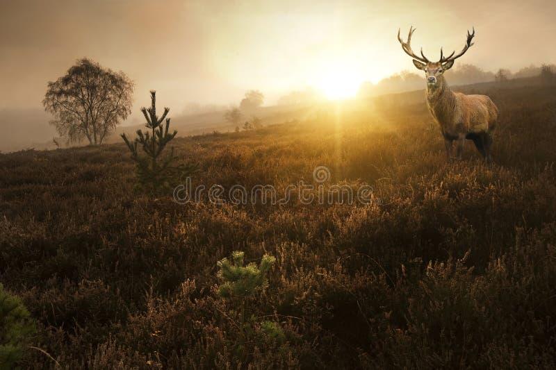 Красивейший ландшафт пущи туманнейшего восхода солнца в пуще   стоковые фото