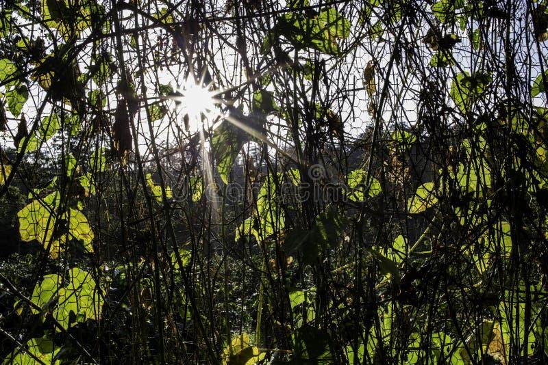красивейший ландшафт сельской местности стоковые фотографии rf