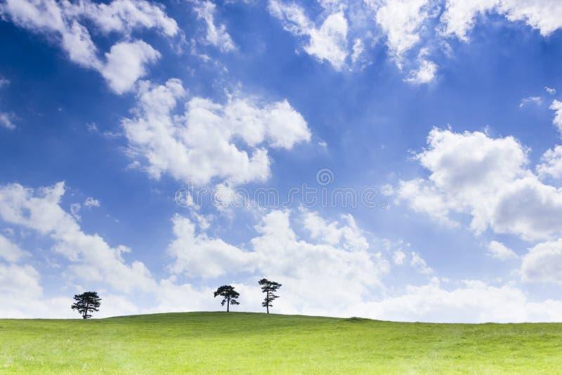 Красивейший лужок на солнечный день стоковое изображение rf