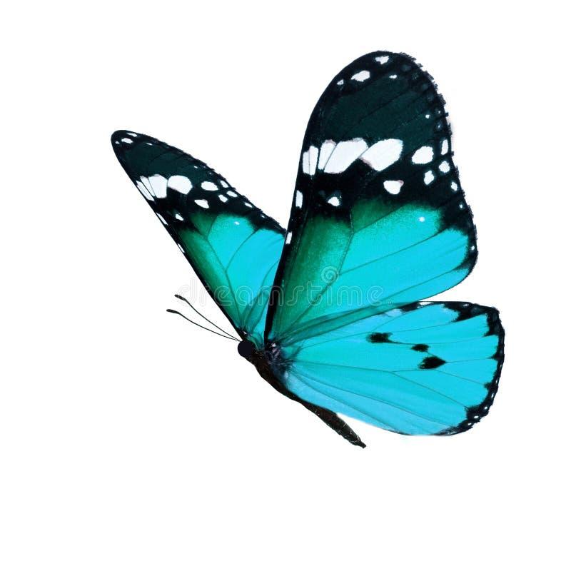 красивейший монарх бабочки стоковые изображения