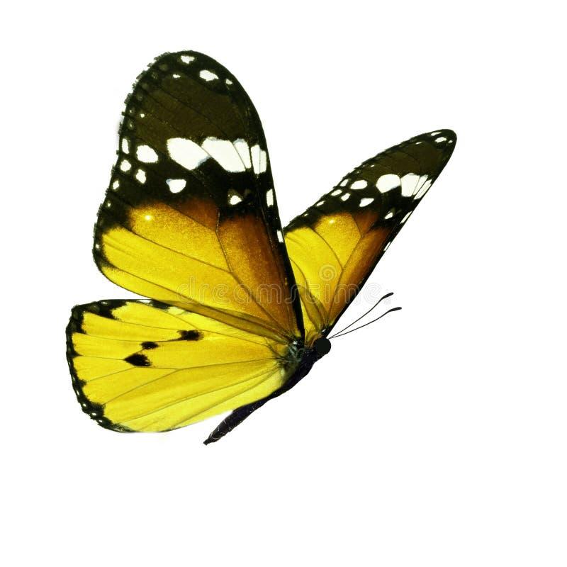 красивейший монарх бабочки стоковое фото rf