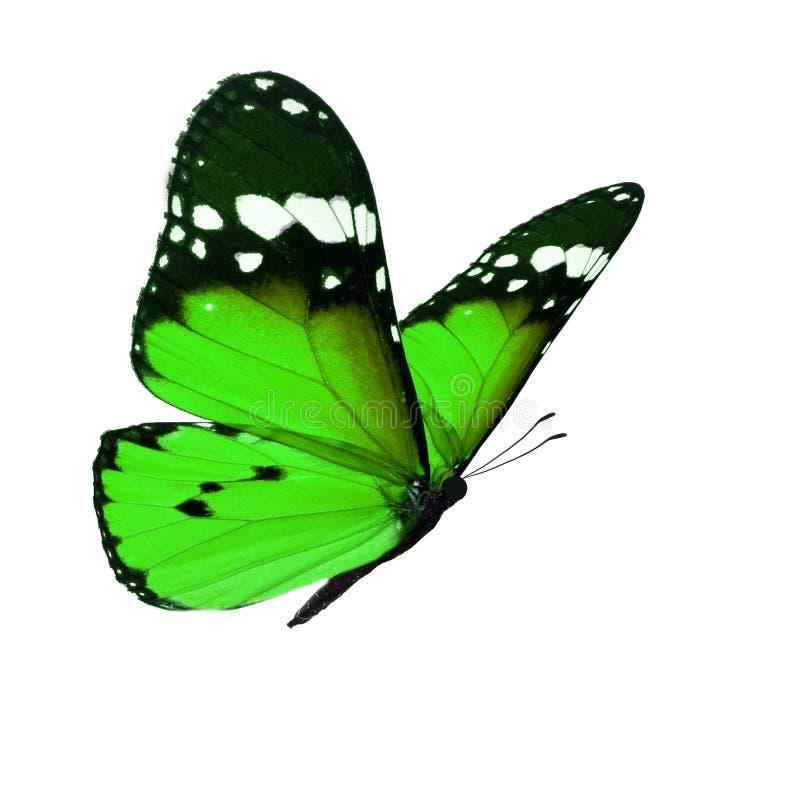 красивейший монарх бабочки стоковая фотография