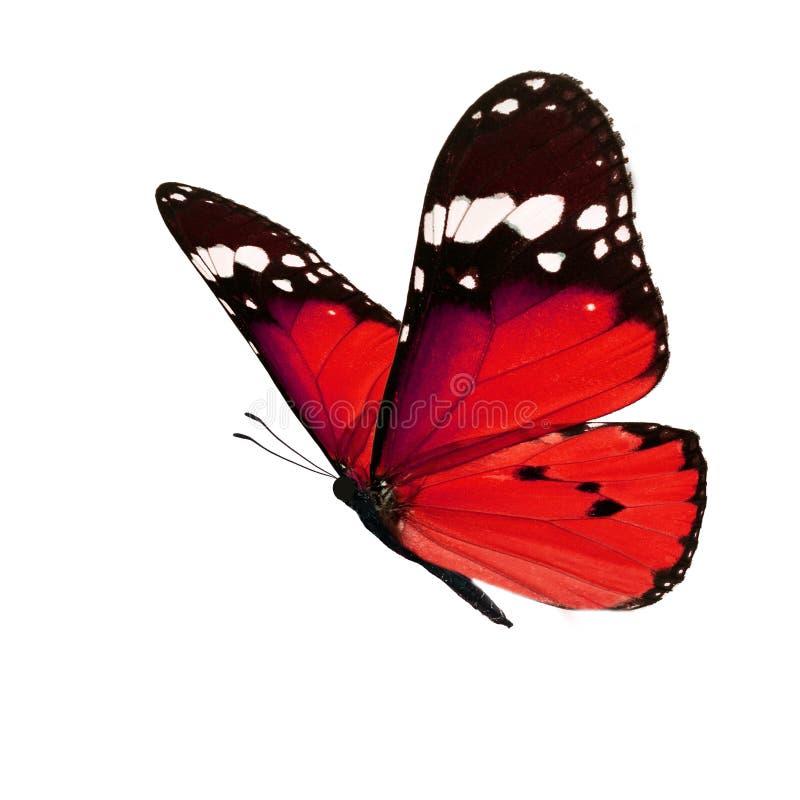 красивейший монарх бабочки стоковое изображение rf
