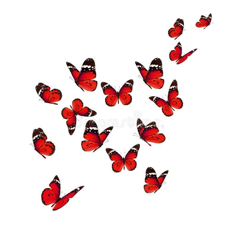 красивейший монарх бабочки стоковые изображения rf