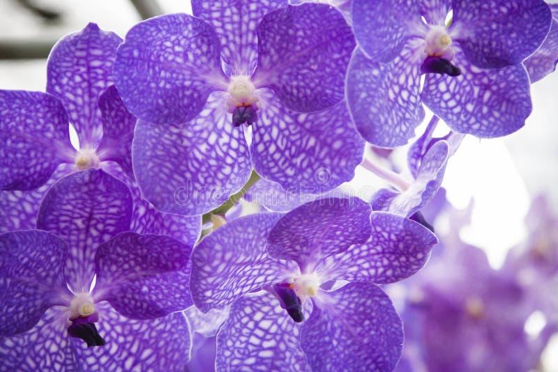 красивейший пурпур орхидеи стоковая фотография