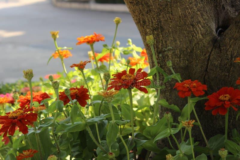 красивейший сад цветка стоковые изображения rf