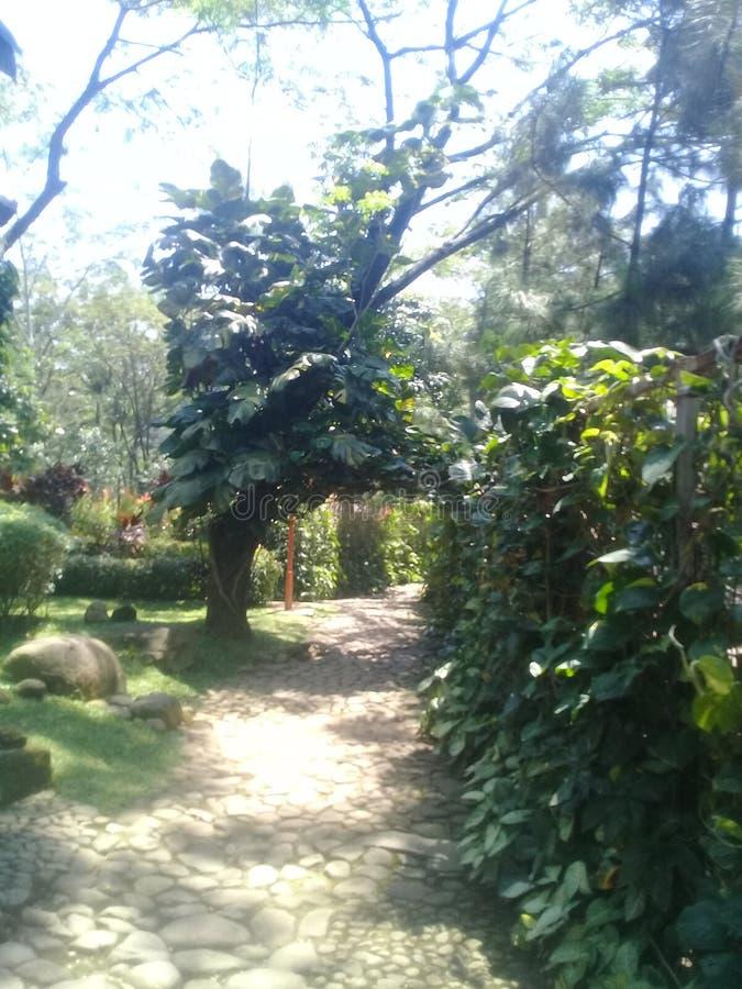 красивейший сад стоковое изображение