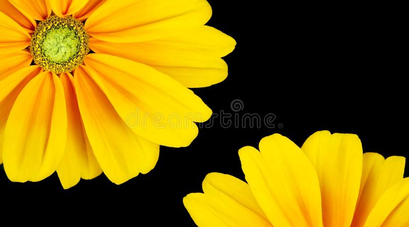 красивейший солнцецвет рамки стоковое фото rf