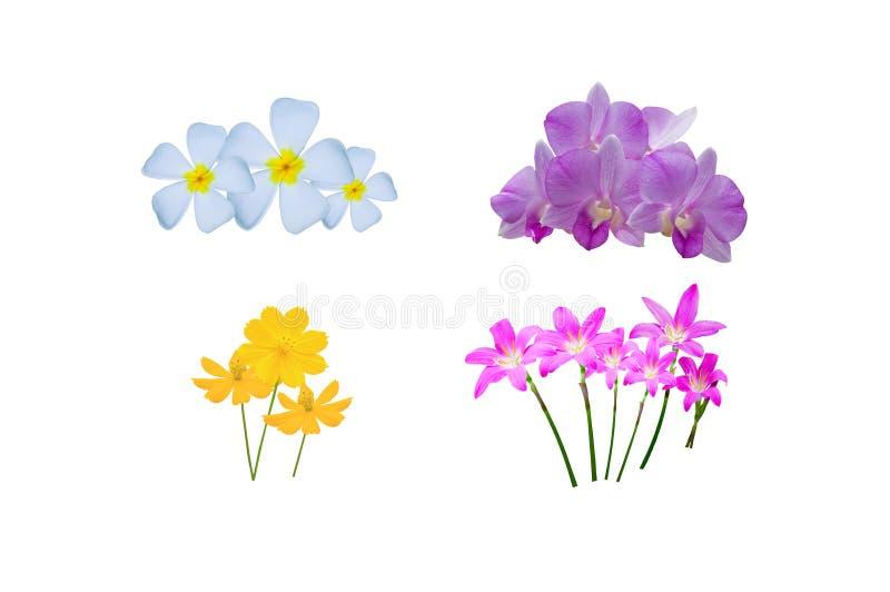Красивейший тайский цветок стоковое изображение rf