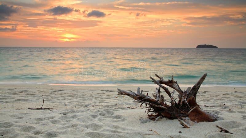 Красивейший тропический пляж с деревянной хворостиной на сумерк в утре стоковые фотографии rf
