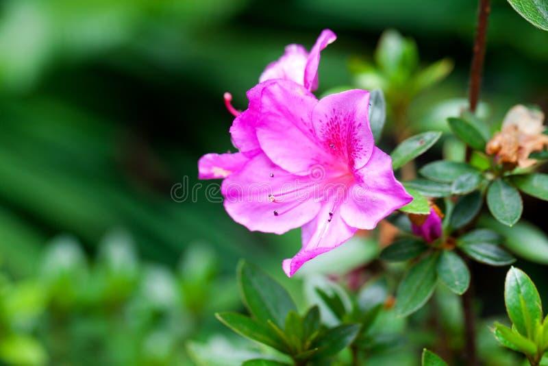 Тропический цветок против зеленой естественной предпосылки стоковое фото rf