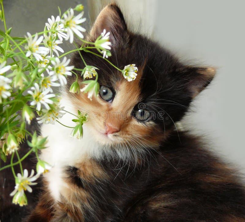 красивейший усмехаться котенка стоковая фотография