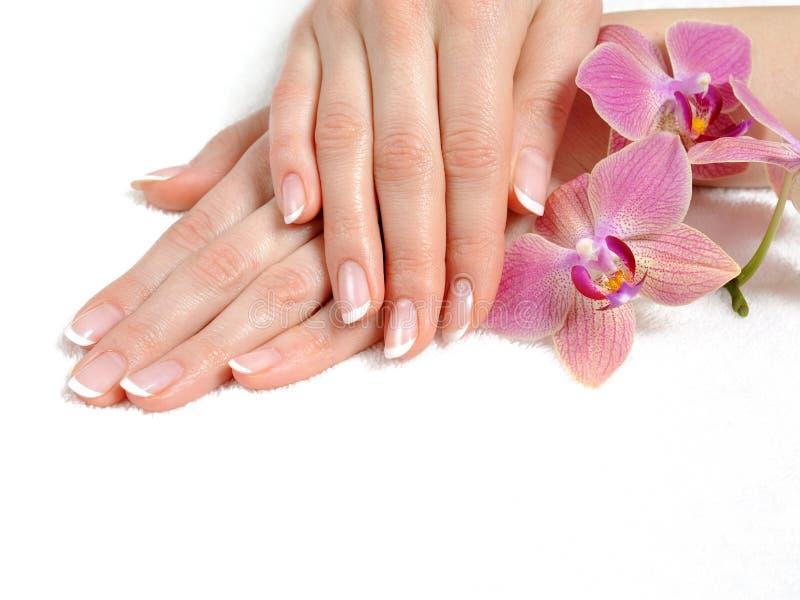 красивейший французский ноготь manicure руки совершенный стоковое изображение rf