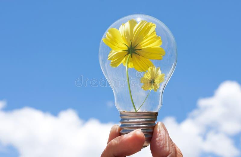 красивейший цветок шарика внутри света стоковое фото rf