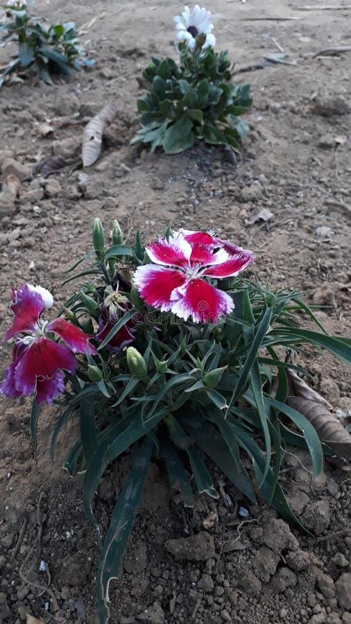 Красивейший цветок стоковые фотографии rf