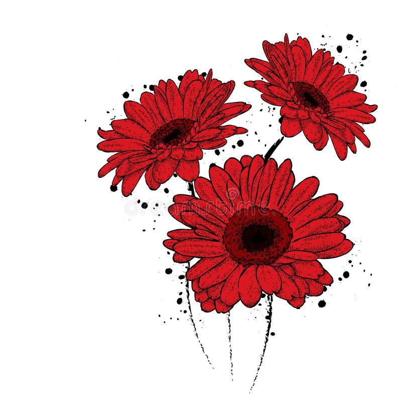 красивейший gerbera Цветы иллюстрация вектора