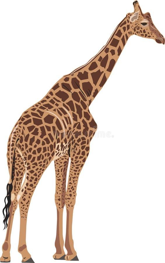 красивейший giraffe бесплатная иллюстрация