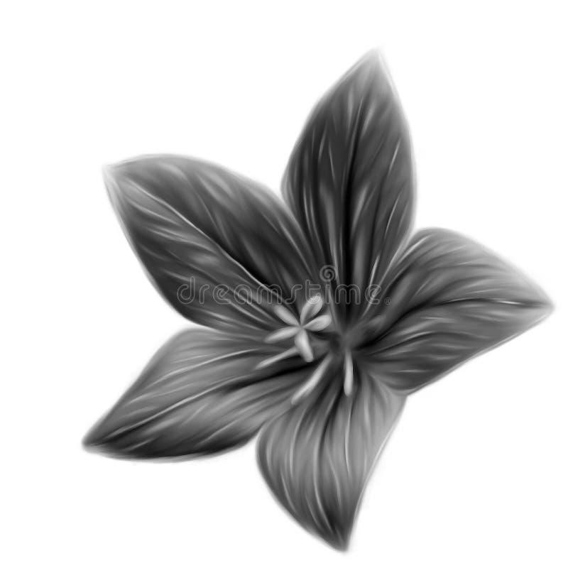 красивейший monochrome цветка бесплатная иллюстрация