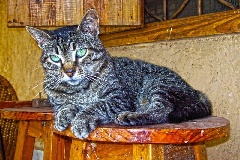 красивейший tabby кота стоковая фотография rf