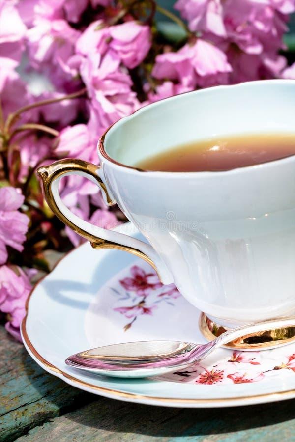 Красивое, английское, винтажное чашка с японскими цветениями вишневого дерева стоковая фотография