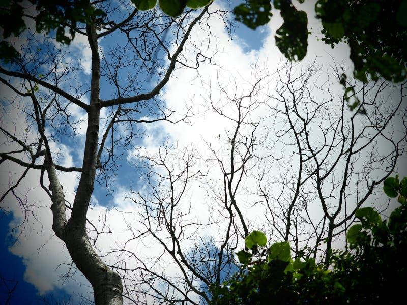 Красивое голубое небо и некоторое облако альта cumulous с ветвью дерева стоковая фотография rf