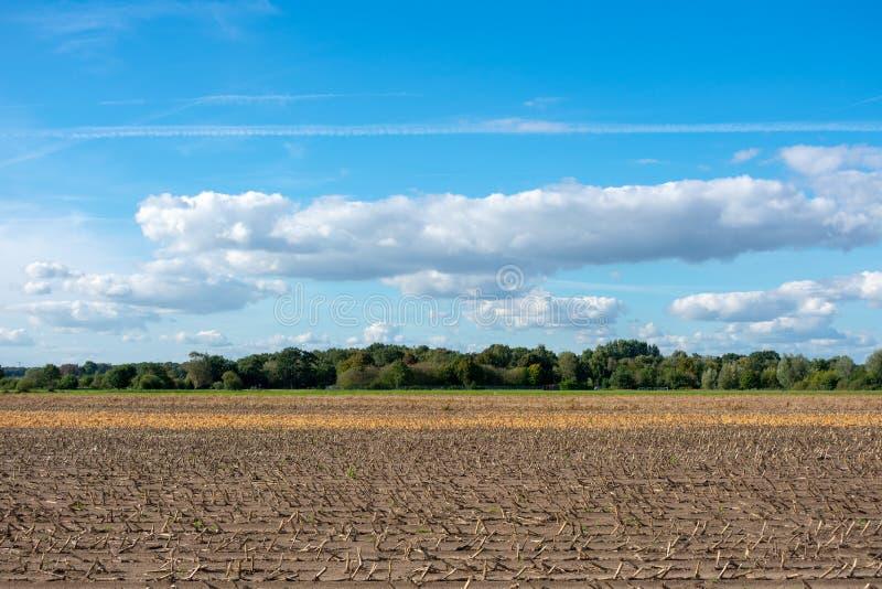 Красивое голубое небо с cloudscape над полями стоковые фотографии rf