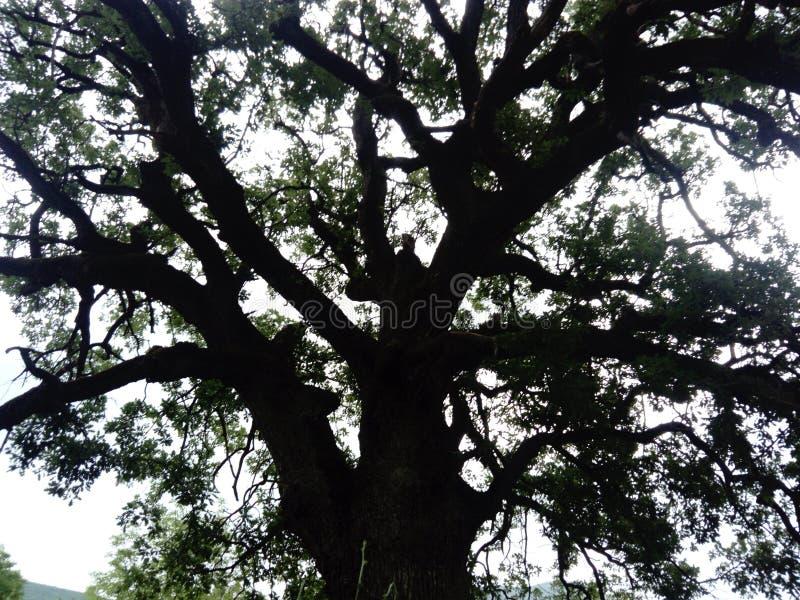 Красивое дерево с интересной ветвью стоковое фото rf