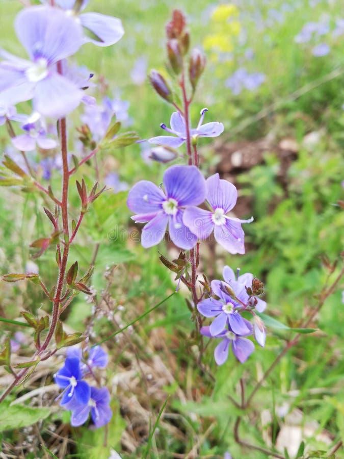 Красивое дикое Nature& x27; цветок s розовый стоковое фото rf