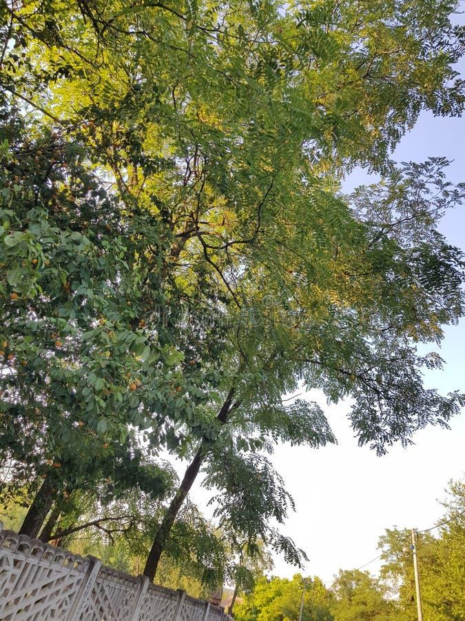Красивое дерево в природе стоковые фото