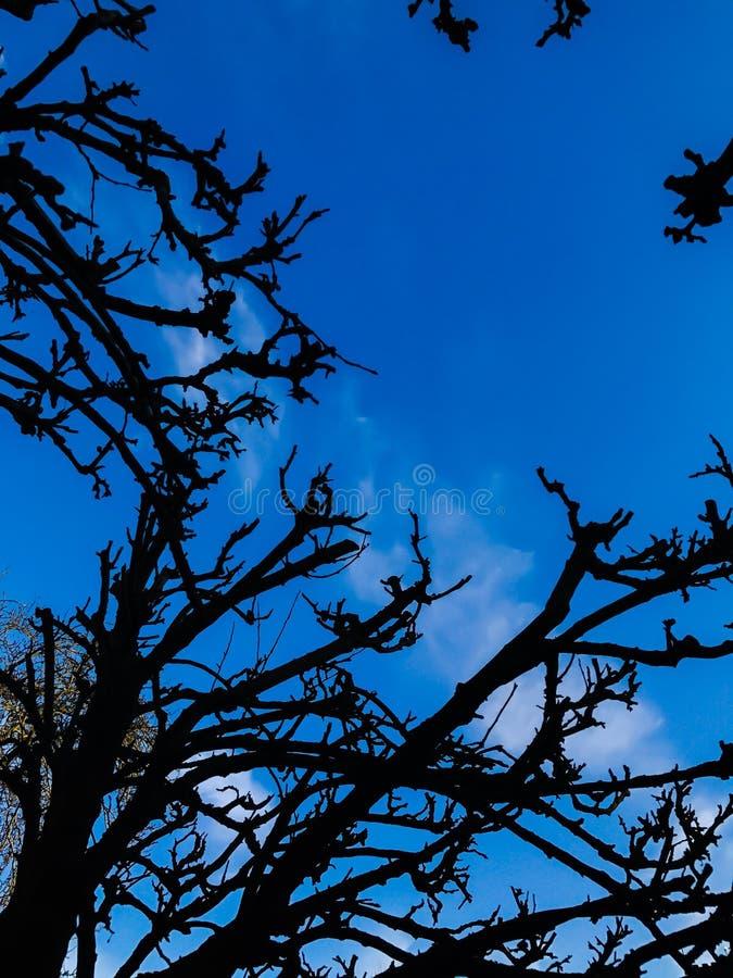 Красивое дерево стоя против яркого голубого неба стоковое фото rf