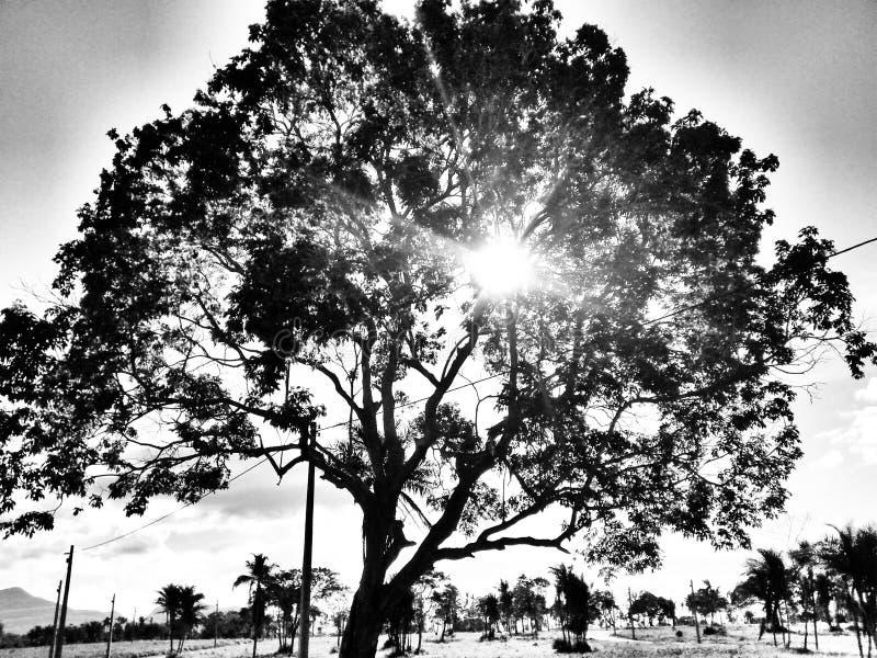 Красивое дерево стоковая фотография rf