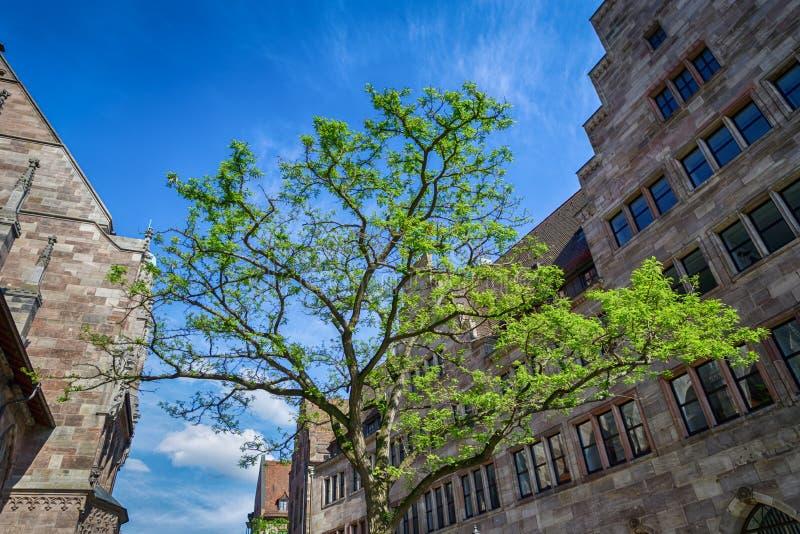 Красивое зеленое дерево на улице Нюрнберга, Баварии, Германии стоковая фотография