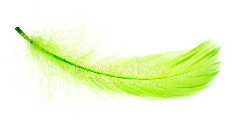 Красивое зеленое перо на белой предпосылке стоковая фотография rf