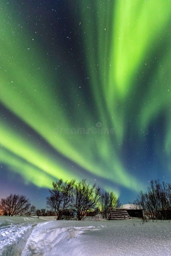 Красивое зеленое северное сияние в голубом небе стоковая фотография