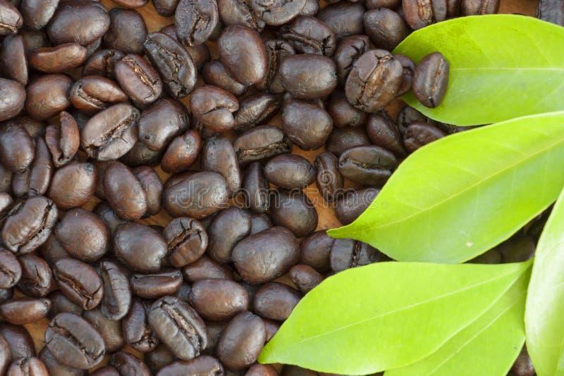 Красивое зерно кофе конца-вверх для текстуры предпосылки стоковое фото
