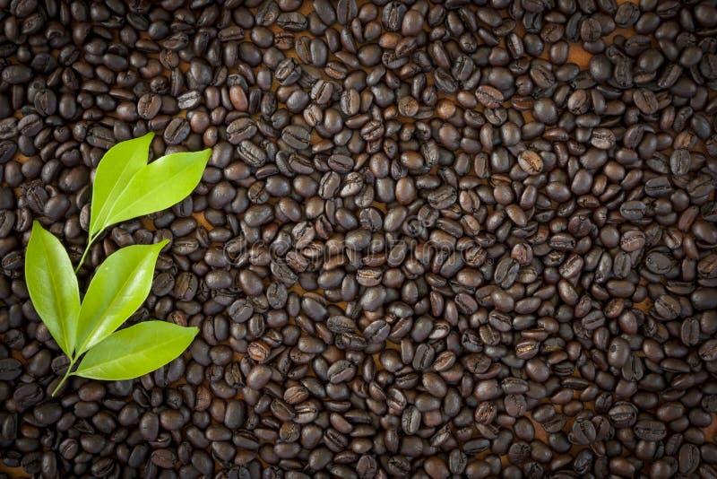 Красивое зерно кофе для текстуры предпосылки стоковое фото rf