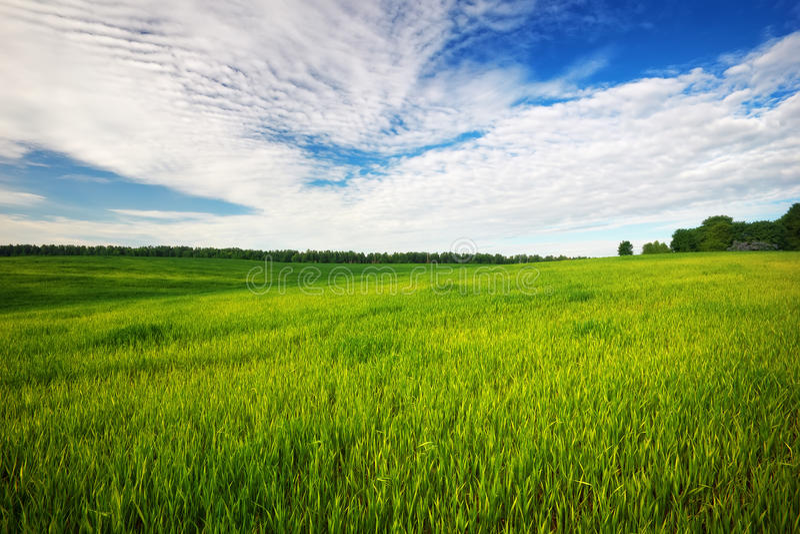 Красивое зеленое поле с голубым небом стоковое изображение rf