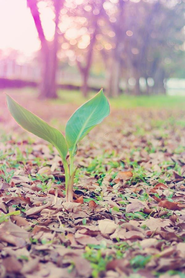 Красивое зеленое растение природы стоковое фото rf