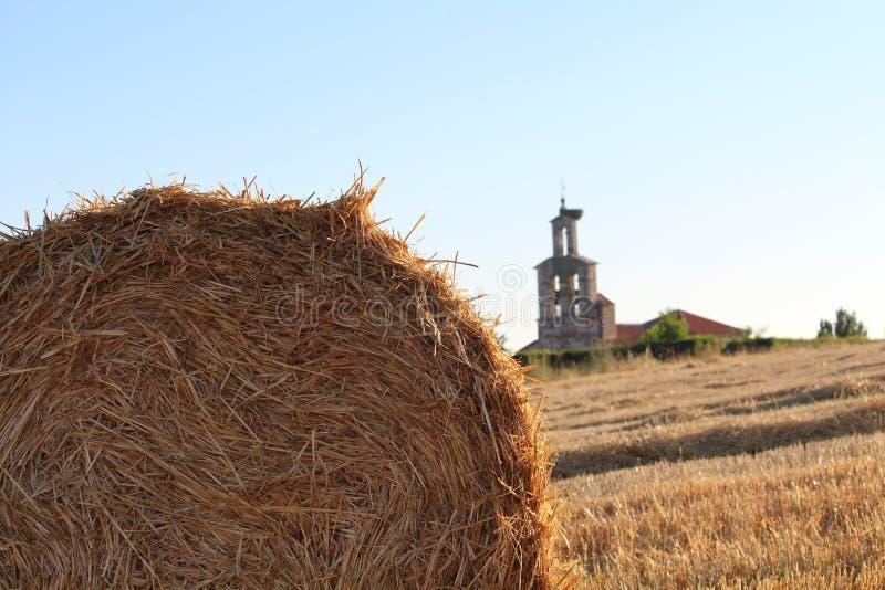 Красивое изображение поля жать зерно стоковые изображения rf
