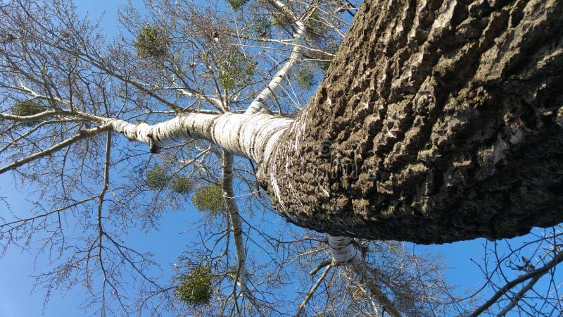 Красивое и изогнутое великолепие дерева весной стоковое изображение rf