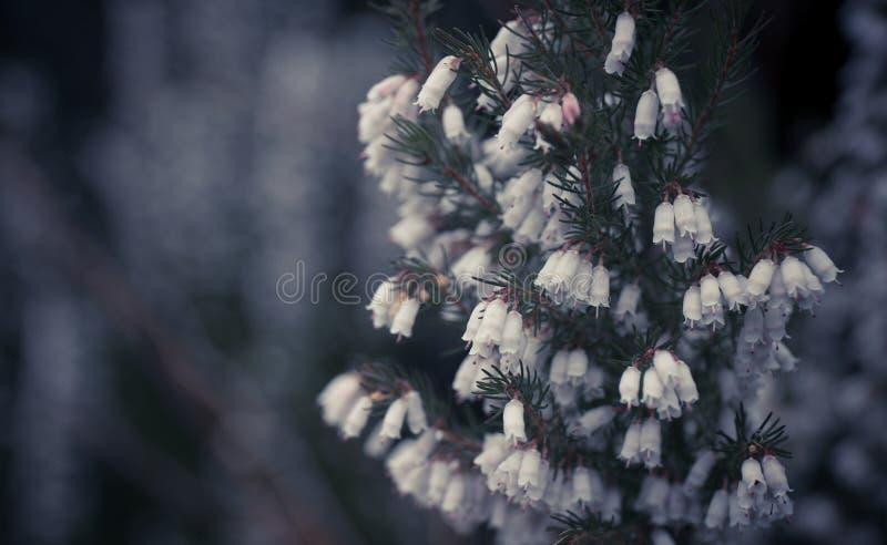 Красивое и унылое изображение цветков в природном заповеднике в Ирландии стоковые изображения