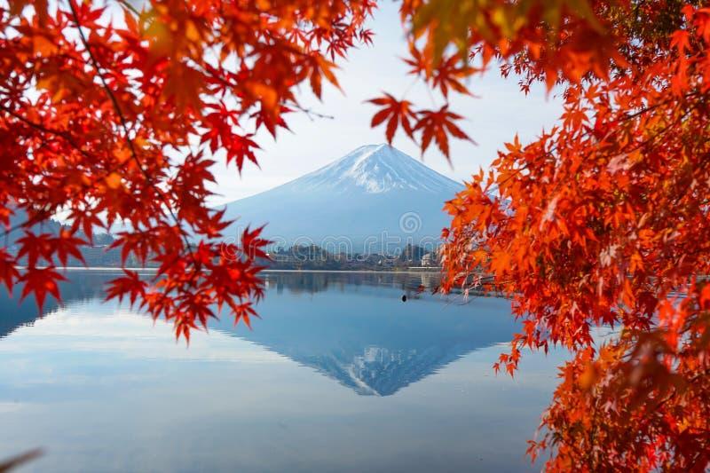 Красивое красное дерево клена лист с Mt Фудзи на Японии в осени стоковое фото
