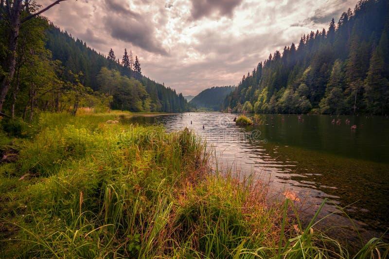 Красивое красное озеро в Румынии стоковые изображения rf