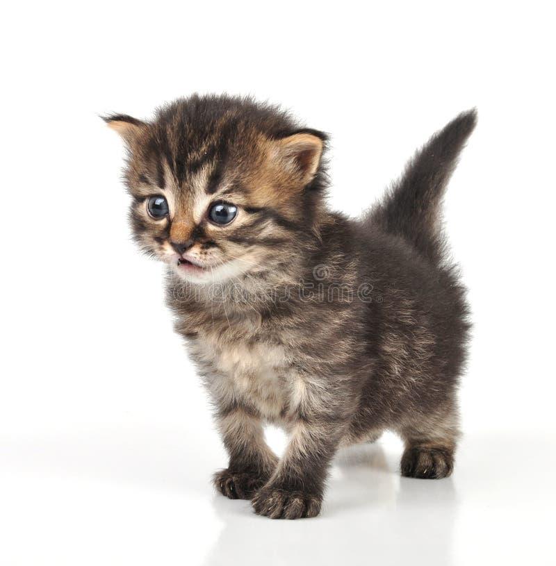 Красивое милое усаживание котенка 20 дней старое стоковое фото