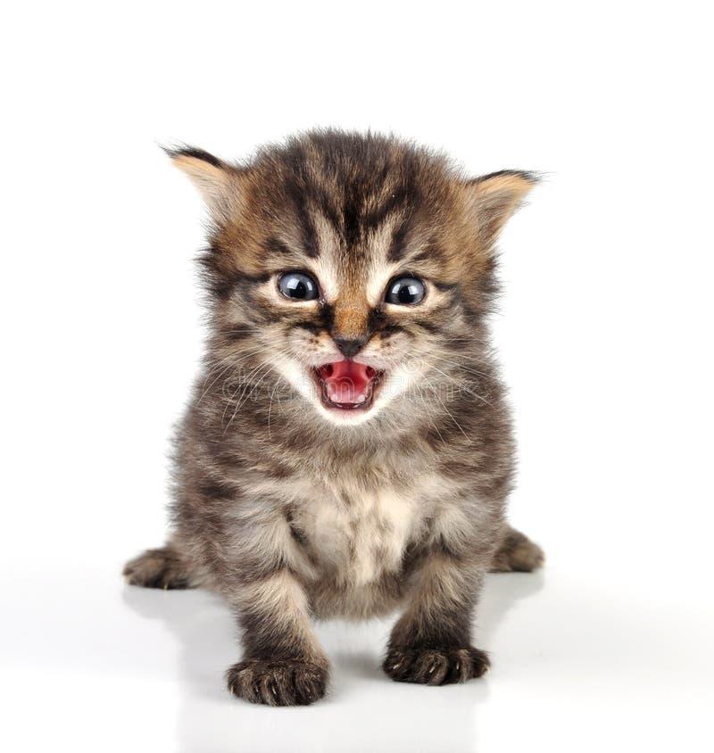 Красивое милое усаживание котенка 20 дней старое стоковые фото