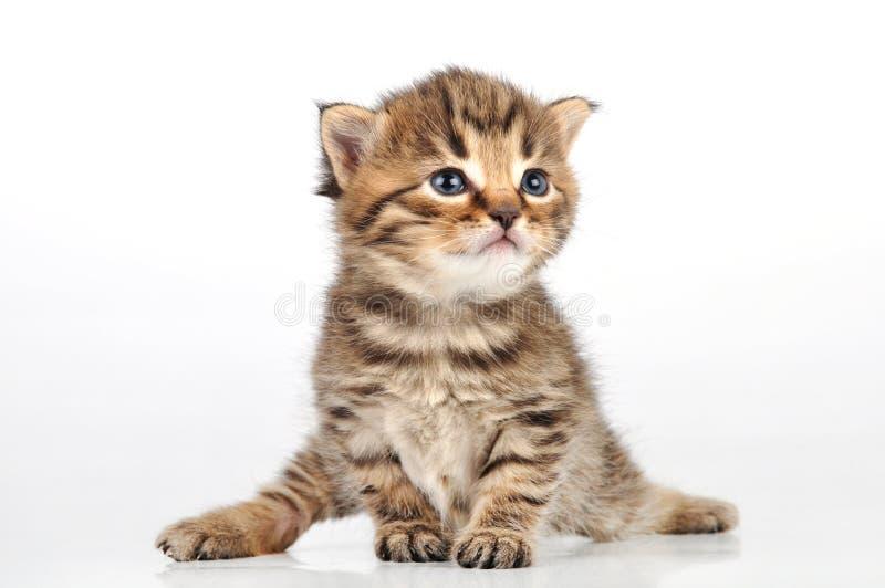 Красивое милое усаживание котенка 20 дней старое стоковые изображения